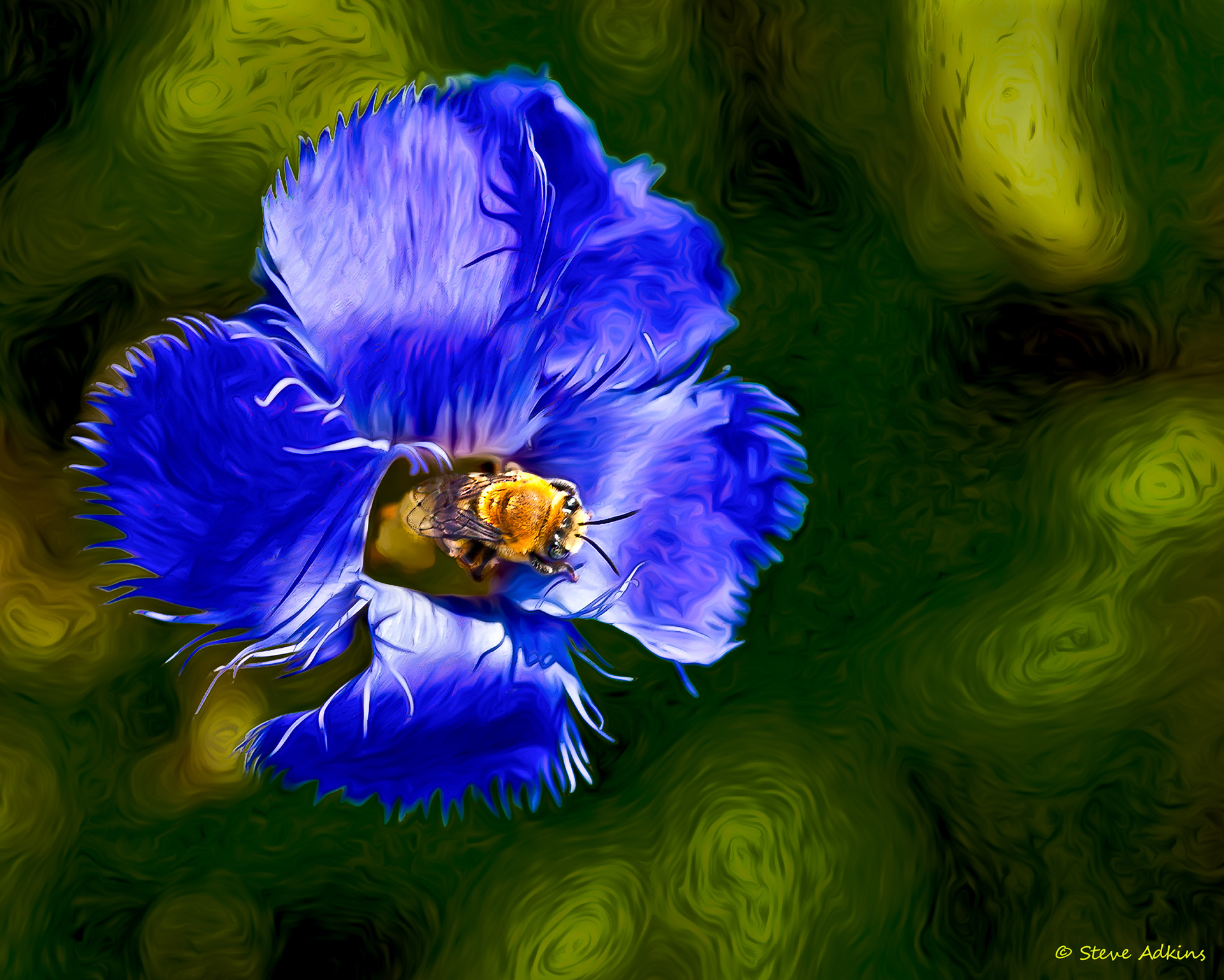 A bee and Fringed Gentian flower.